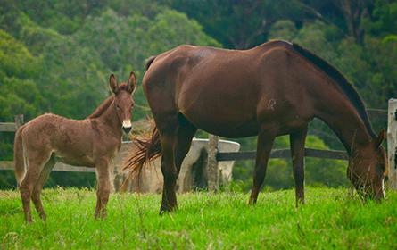 Placentite e Viabilidade Fetal